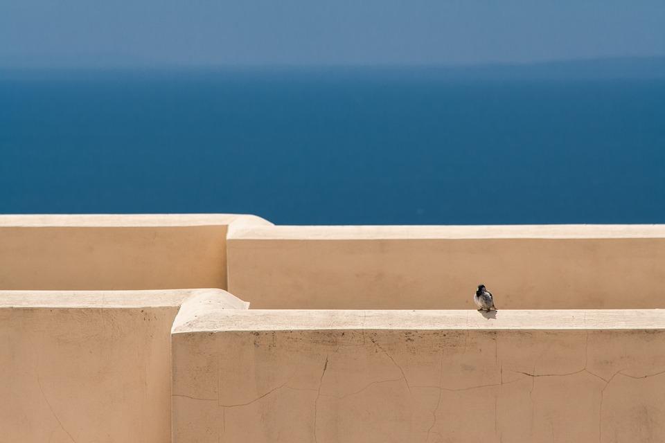Sea, Sparrow, Blue, Sky, Vacations, Bird, Animal World