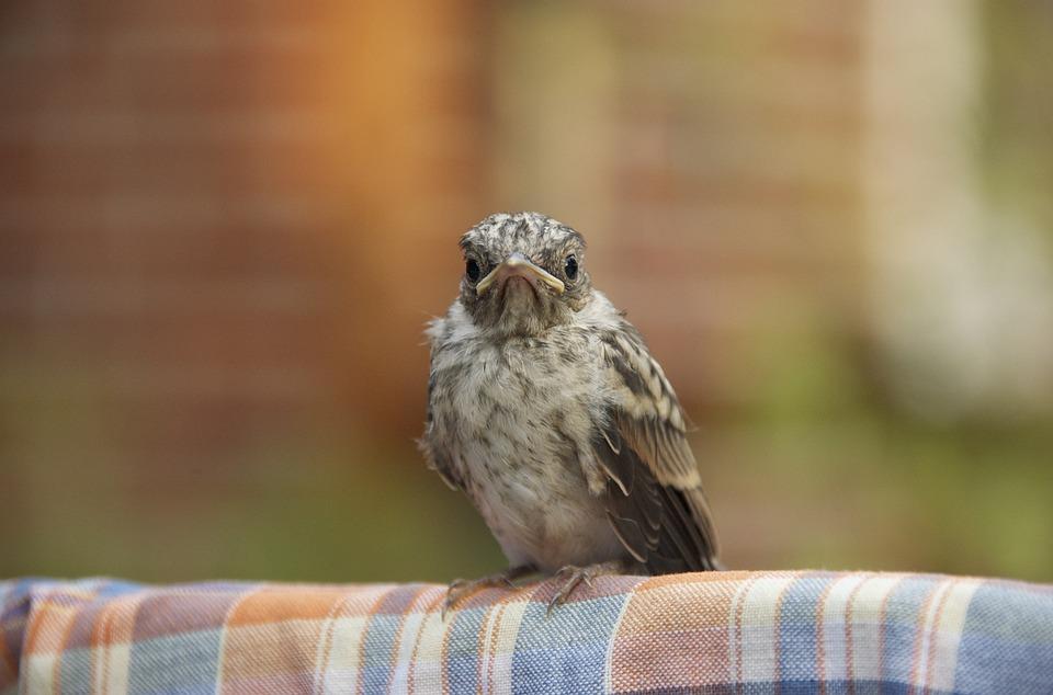Nature, Bird, Animal World, Animal, Young Bird, Sparrow