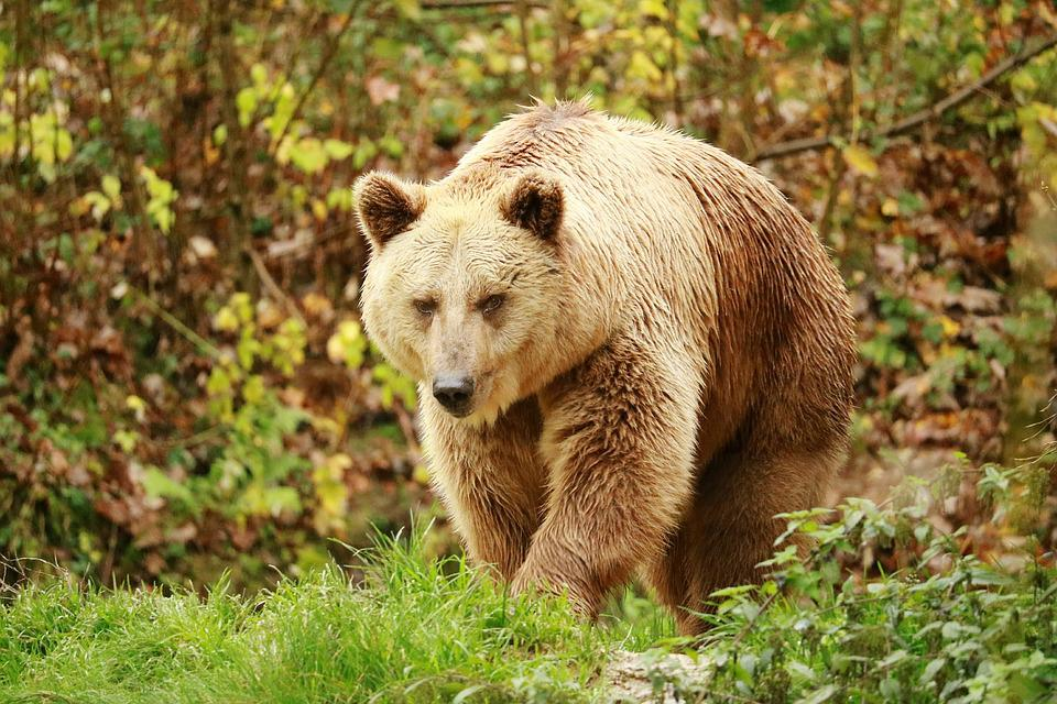 Nature, Animal World, Mammal, Animal, Grass, Carnivores