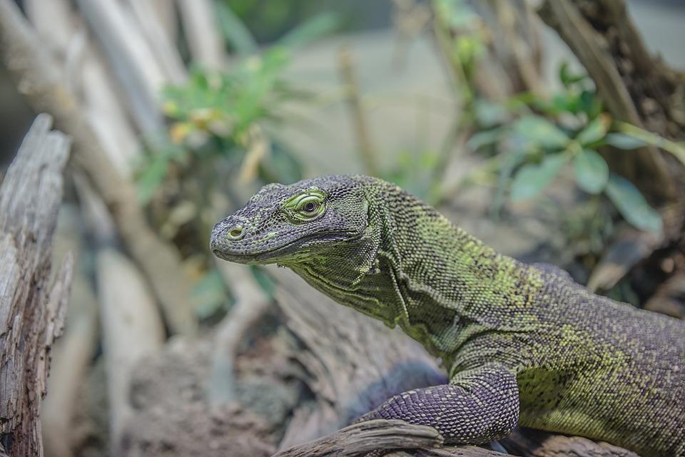 Gecko, Lizard, Animal, Animal World, Reptile, Close Up