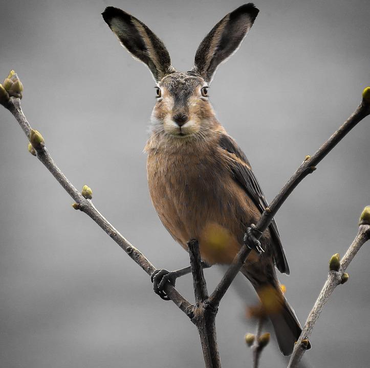 Animal World, Nature, Animal, Easter, Composing, Cute
