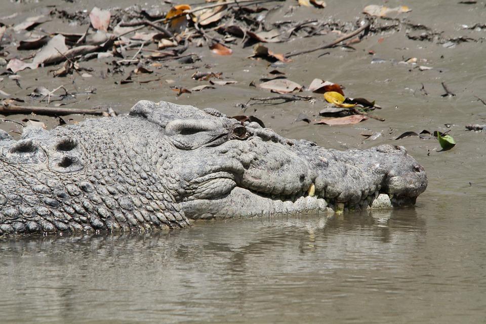 Crocodile, Reserve, Predator, Tooth, Animal World
