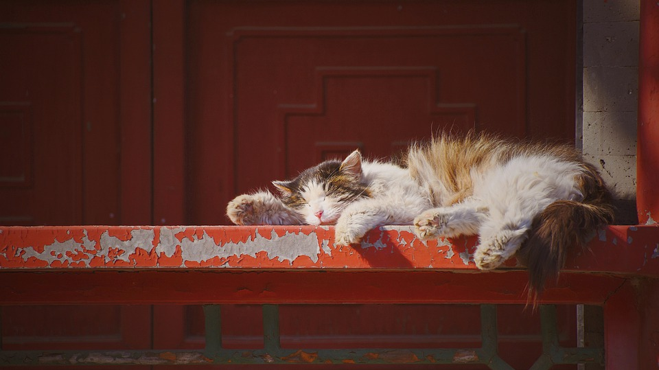 Cat, Sleeping, Red, Kitten, Animal World, Playful, Cute