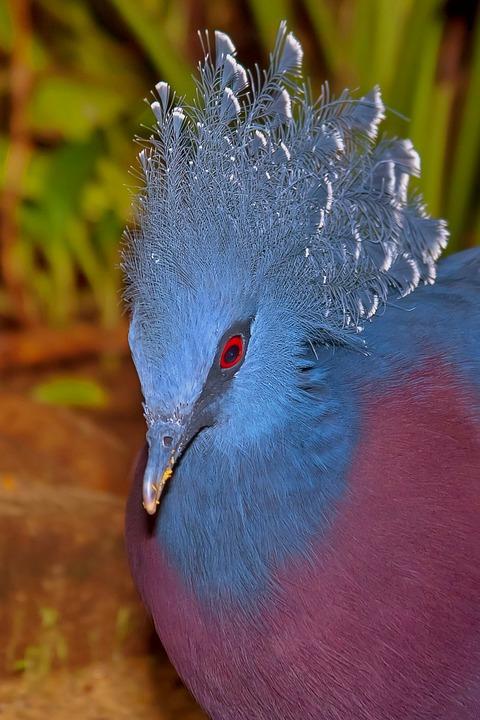 Bird, Dove, Quail, Animal World, Nature, Flying