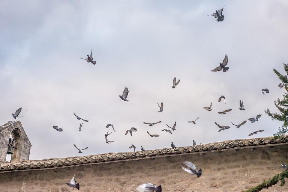 Pigeons, Fly, Church, Bird, Nature, Wing, Animal World