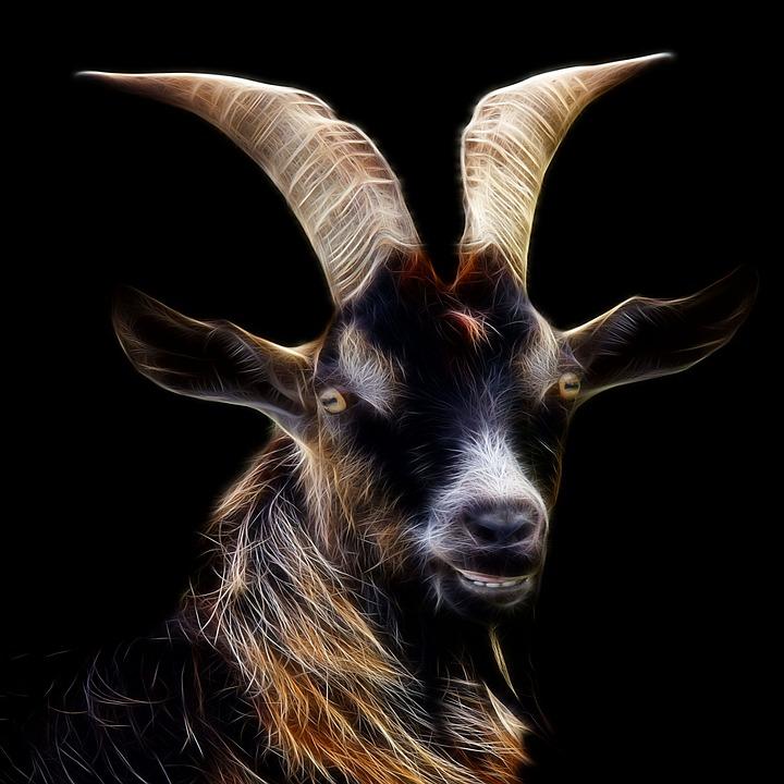 Goat, Fractalius, Profile Picture, Animal World