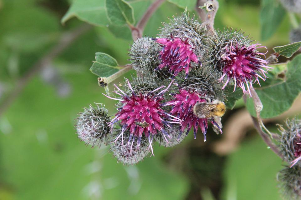 Hummel, Plant, Animal World, Insect Macro, Flora
