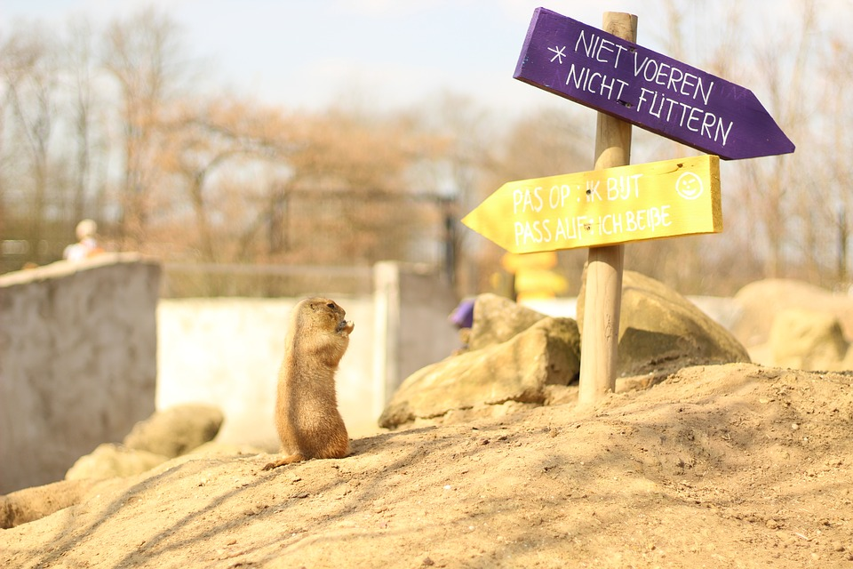 Nature, Animal, Meerkat, Animal World, Sand, Directory