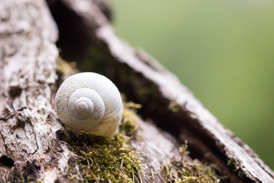 Shell, Snail, Nature, Casing, Close Up, Animal World