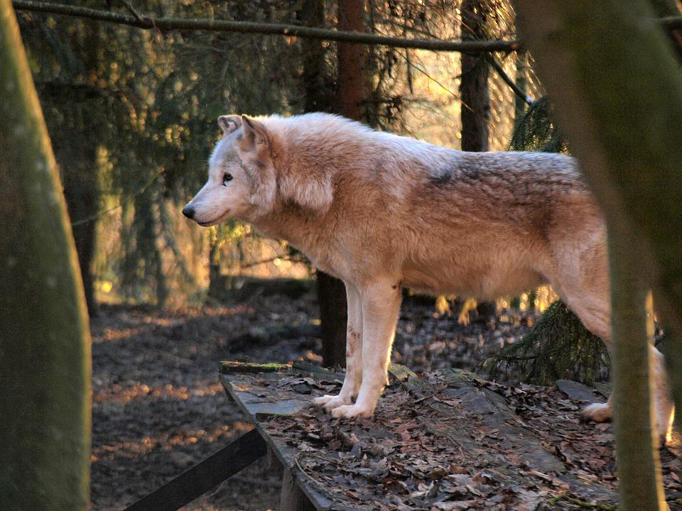 Mammal, Nature, Animal World, Animal, Wood