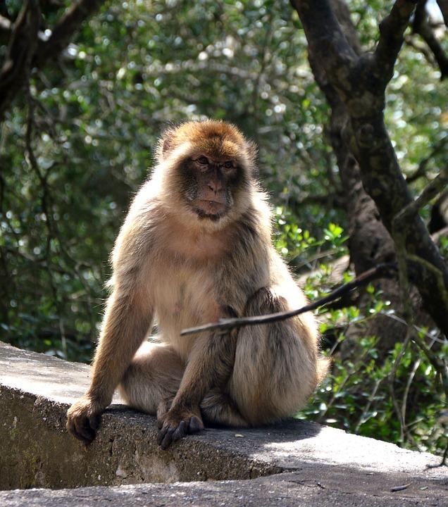 Monkey, Animal World, Primate, Mammal, Nature