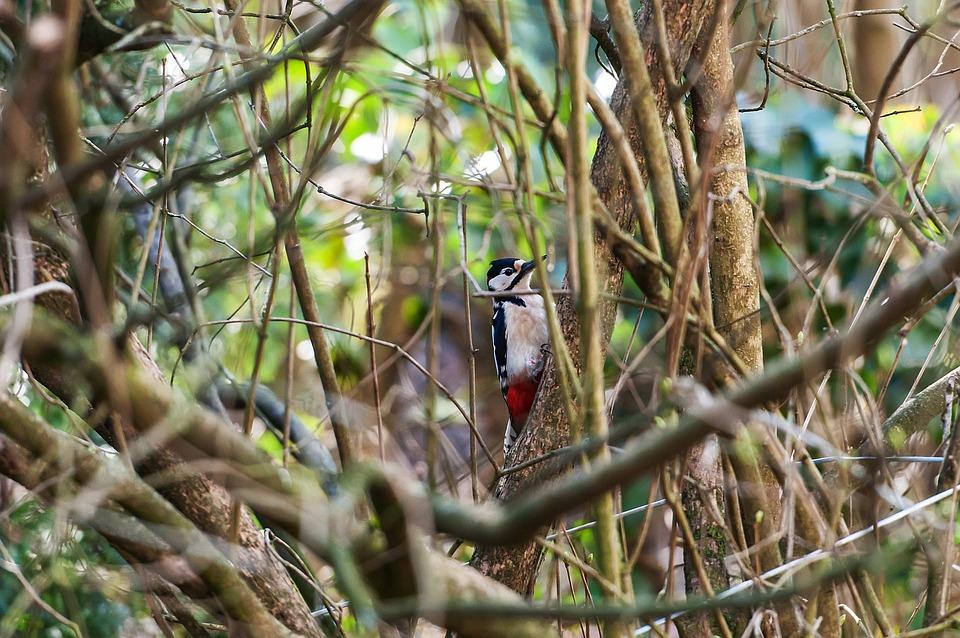 Bird, Nature, Tree, Animal World