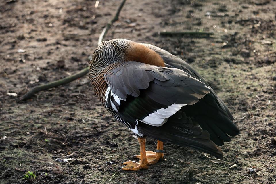 Bird, Animal World, Nature, Animal, Feather, Bill, Wing