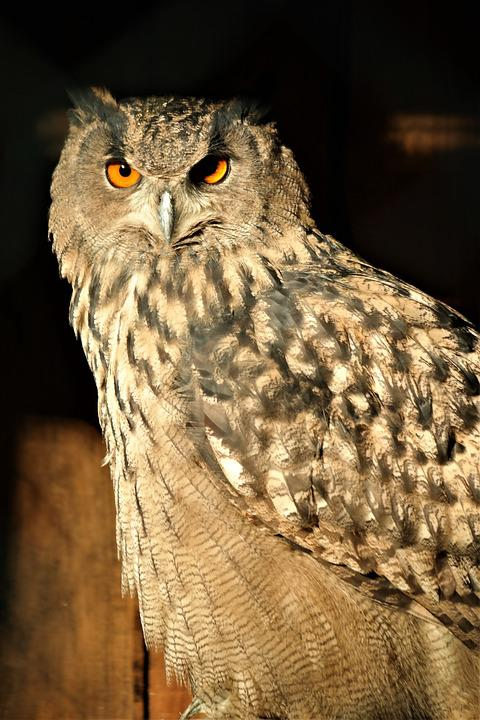 Bird, Owl, Sitting, Plumage, Animal World, Nature