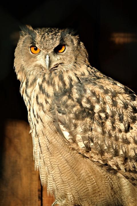 Bird, Owl, Sitting, Plumage, Animal World, Nature