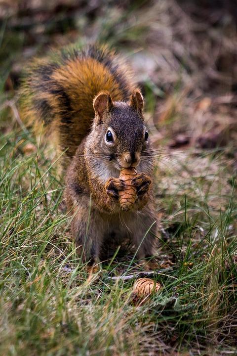 Squirrel, Rodent, Animal, Animal World, Nature, Mammal