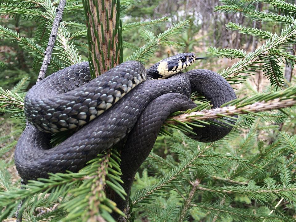 Nature, Tree, Wood, Animal World, Snake, Animal, Wild