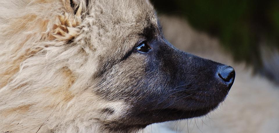 Dog, Fur, Wuschelig, Animal, Wildlife Photography, Cute