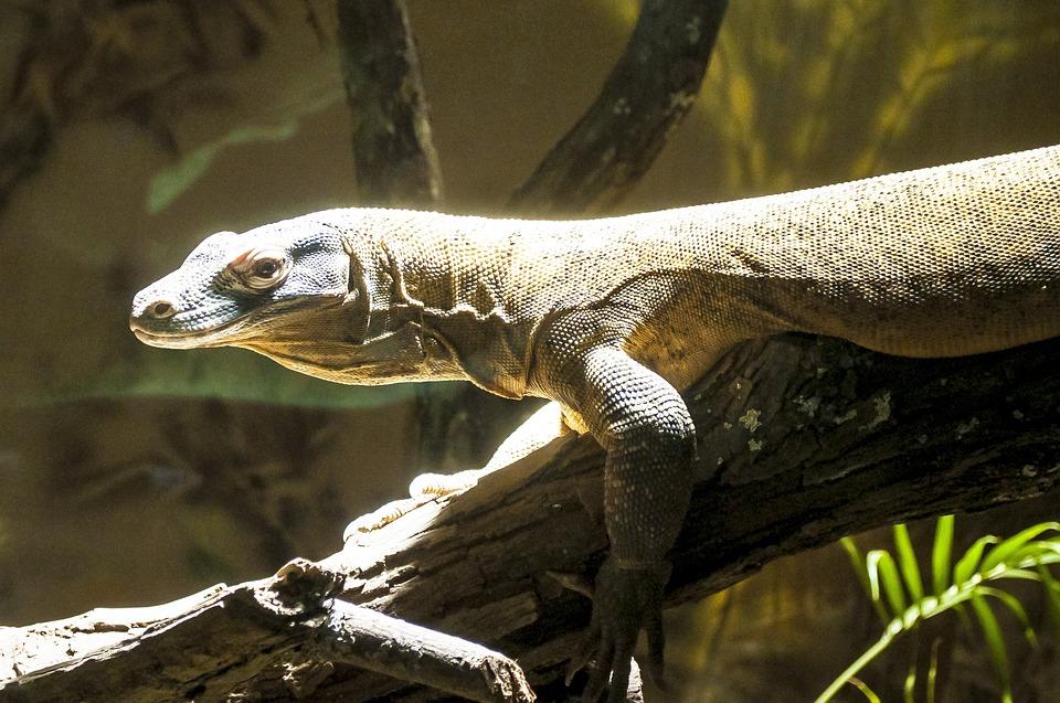 Reptile, Zoo, Animal