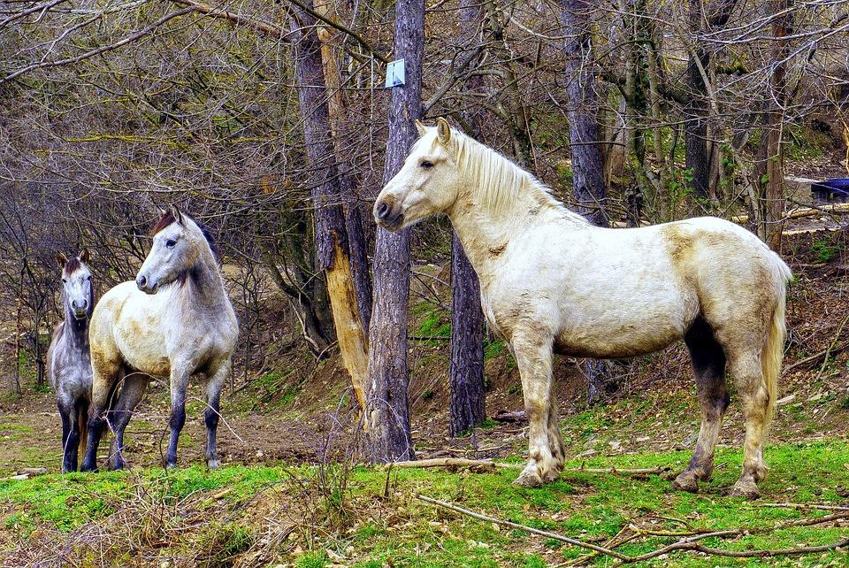 Mammalia, Animalia, Lawn, Cavalry, Henar, Pastures