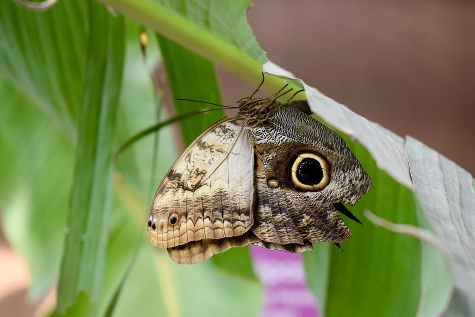 Nature, Animalia, Plant, Approach, Leaf, Insect