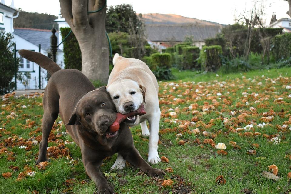 Lawn, Animalia, Nice, Play, Enjoy, Autumn, People