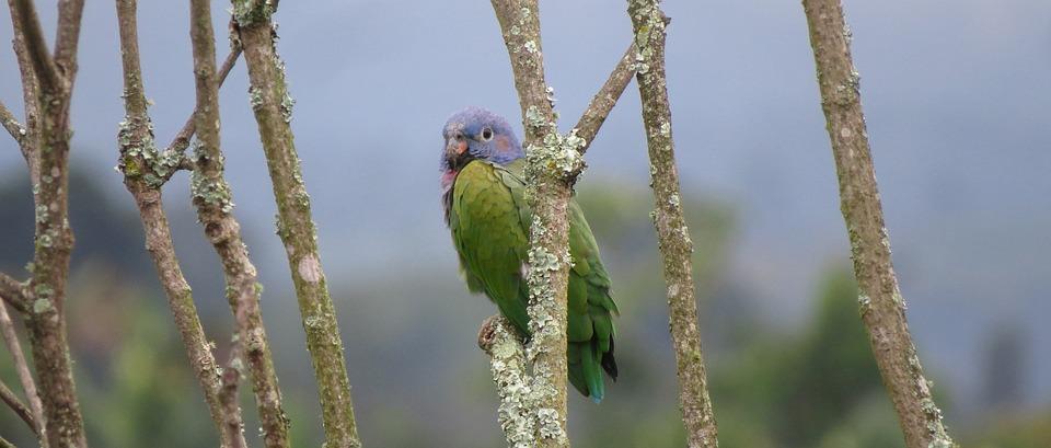 Nature, Birds, Wild Life, Animalia, Outdoors