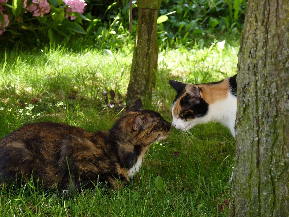 Cat, Animals, Animal, Two