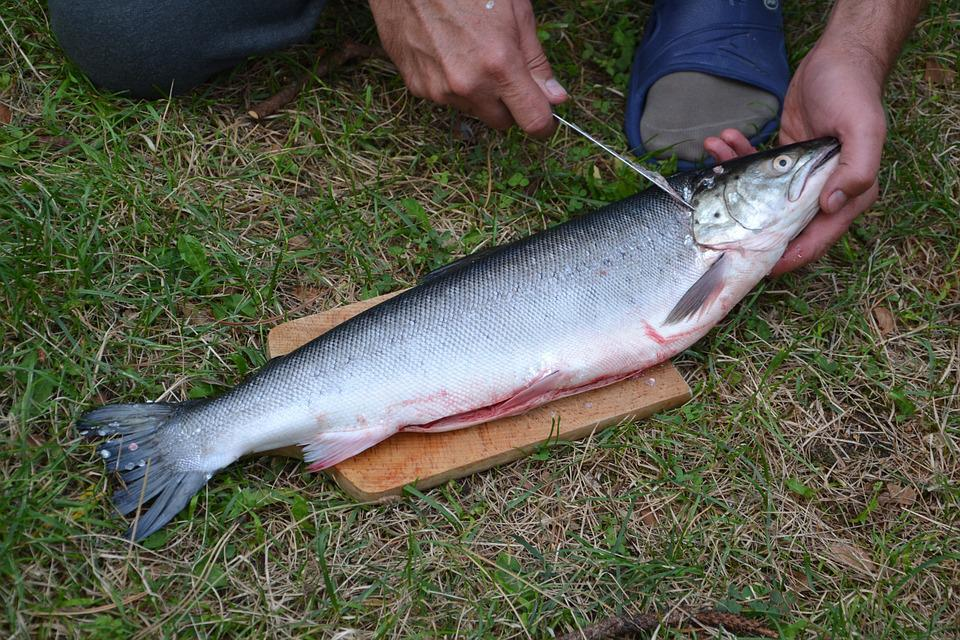 Fish, Pet, Animal, Animals, Water, Beast, Peeling