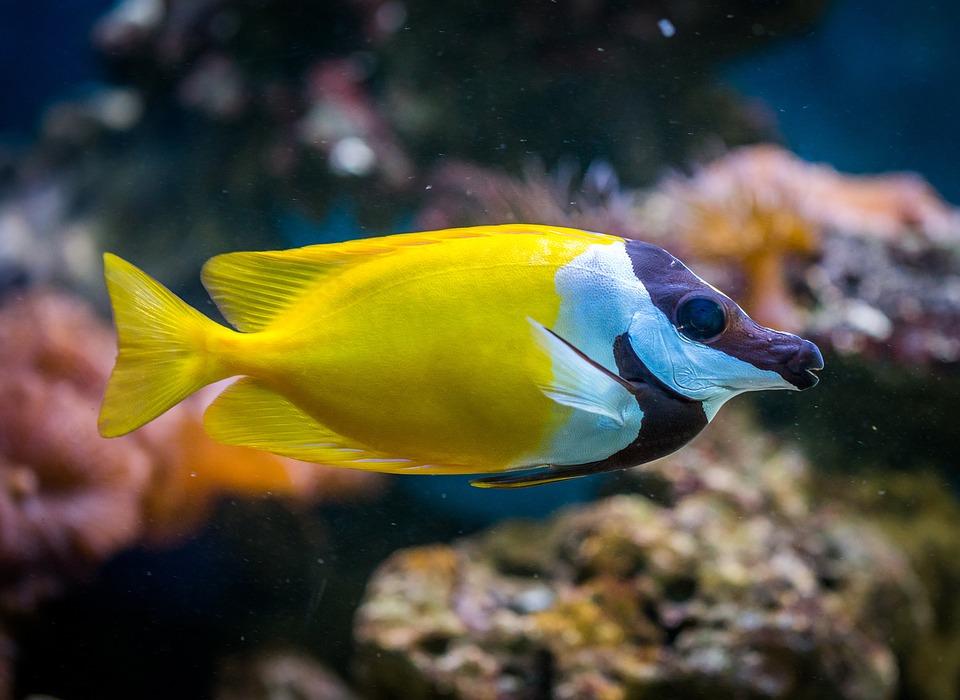Fish, Aquarium, Animals