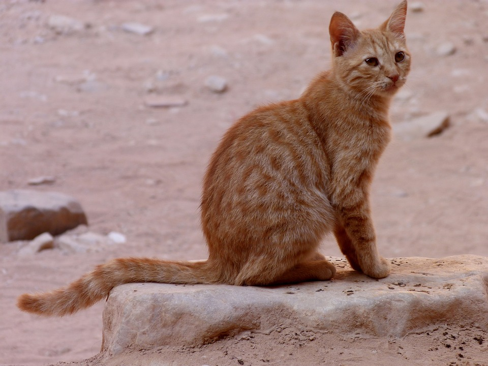 Nature, Charming, Animals, At The Court Of, Cat