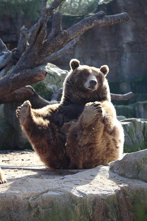 Bear, Zoo, Sitting, Animals