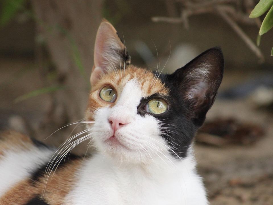 Animals, Cat, Domestic Cat, Animal World, Nature