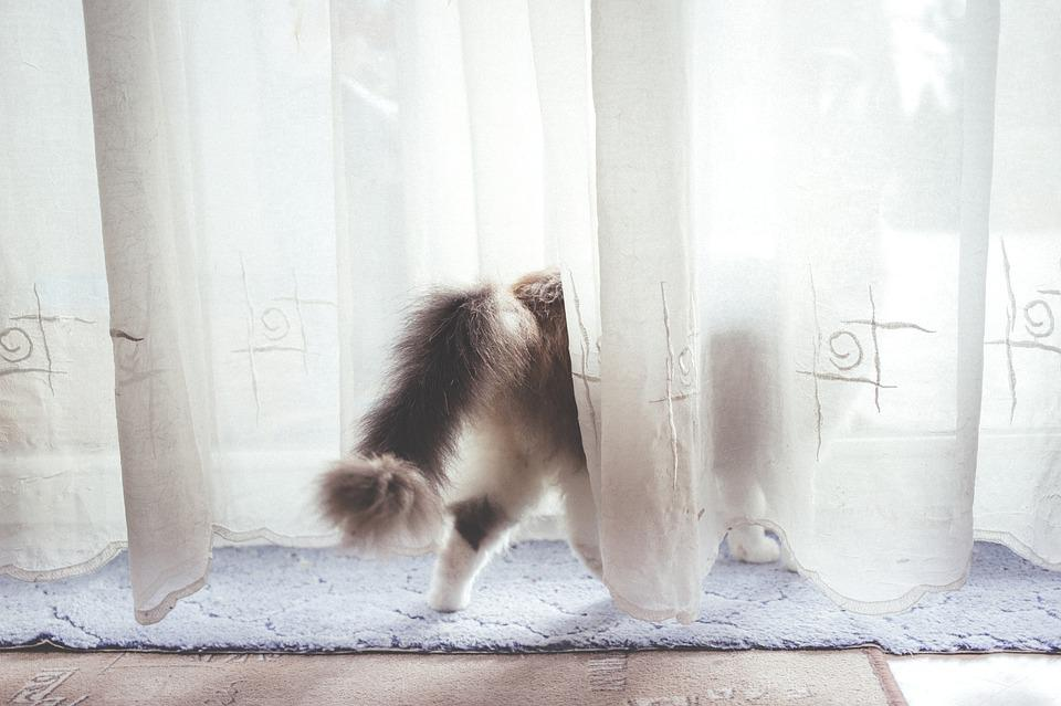animals back cat curtain curtains domestic - Cat Curtains