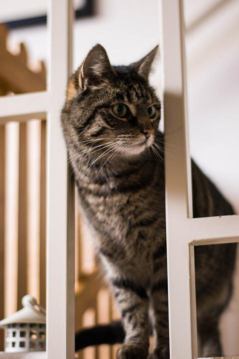 Cat, Animals, Kitten, Domestic Cat, Portrait, Curious