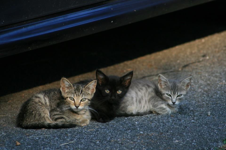 Kittens, Cats, Stray Cats, Pets, Animals, Cute, Young