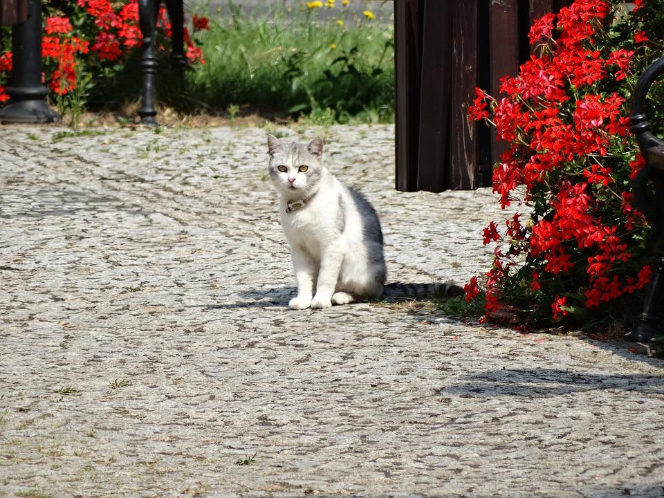 Cat, Animals, Charming, A Normal Cat, Domestic Cat