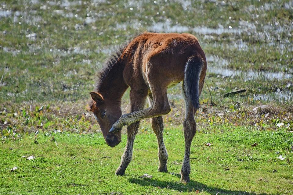 Marsh, Colt, Water, Animals, Nature
