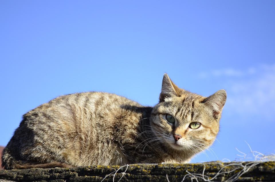 Cat, Darling, Animals, Eyes, Pet, Animal, View, Cats