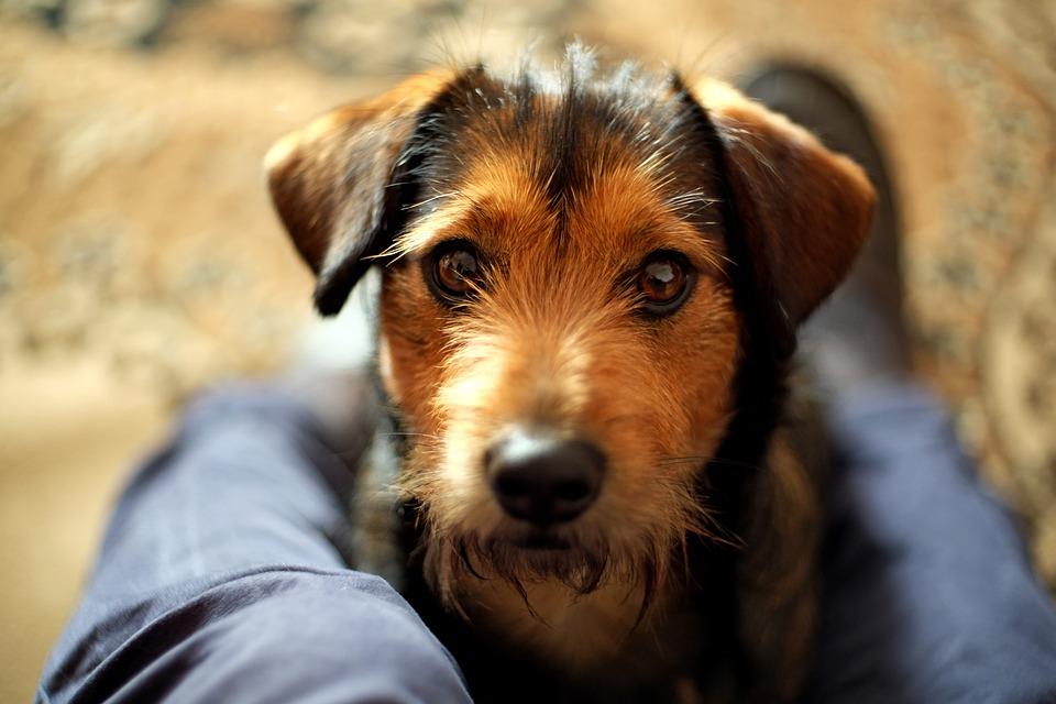 Animals, Dog House, Charming, Mammals