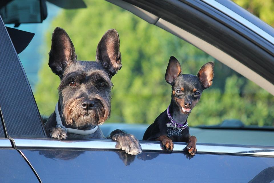 People, Dogs, Animals, Pet, Puppy, Best Friend