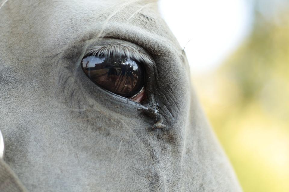 The Horse, Eye, Longing, Melancholia, Animals, Portrait