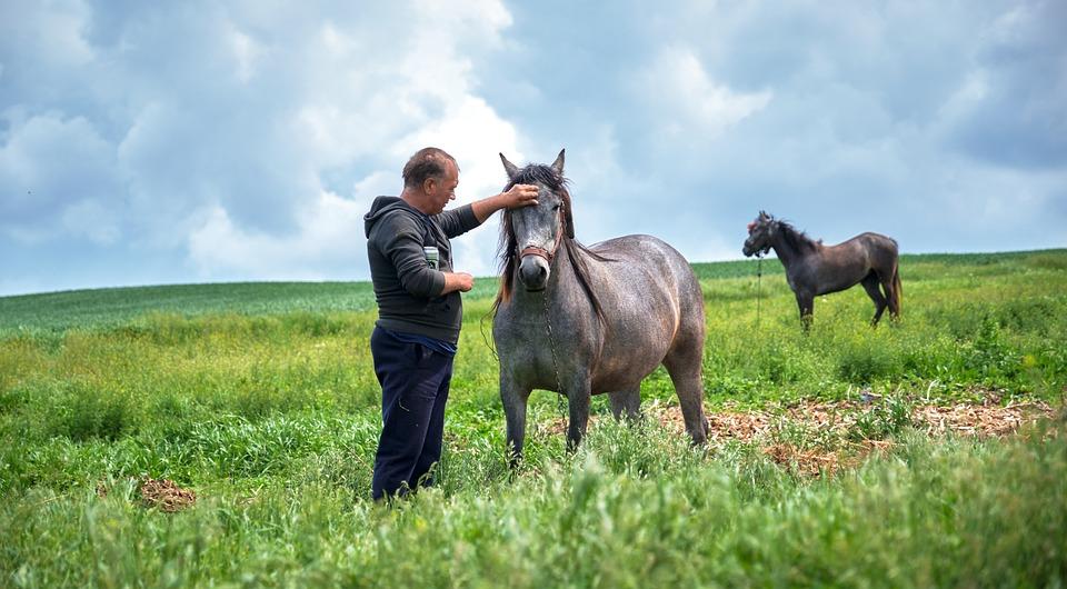 Horse, Farmer, Animals