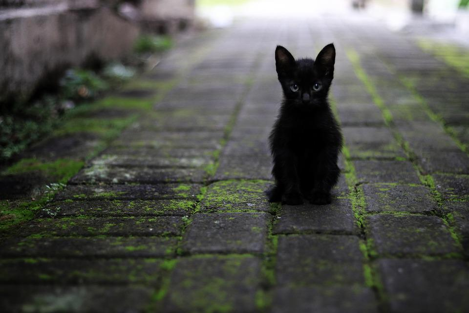 Cat, Black, Animals, Pet, Feather, Star