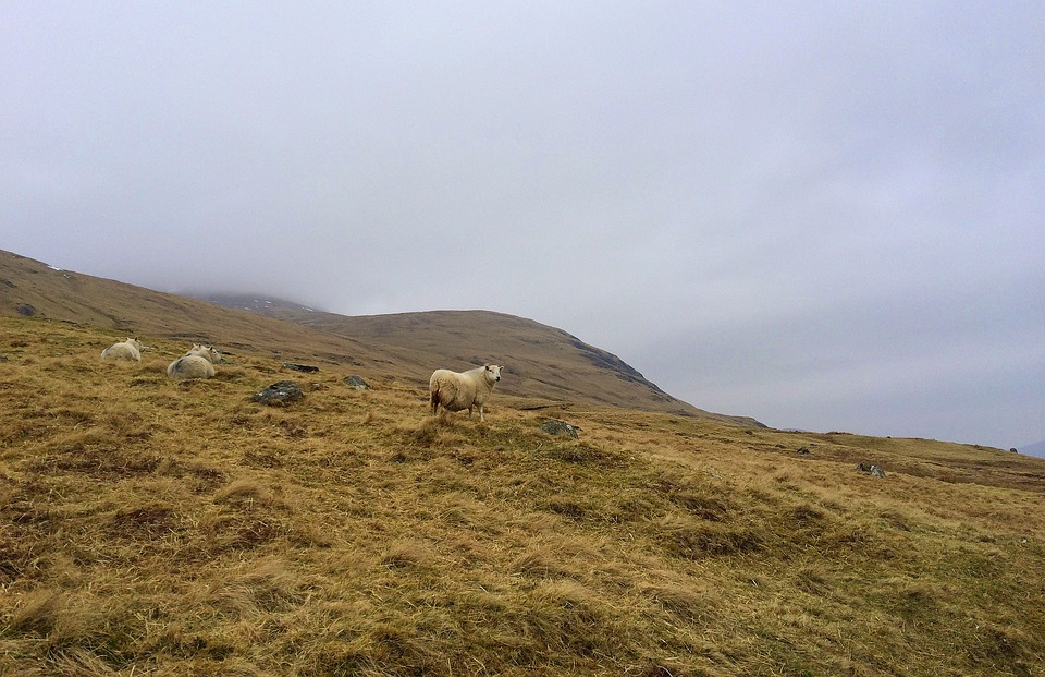 Animals, Countryside, Domestic Animals, Field, Foggy