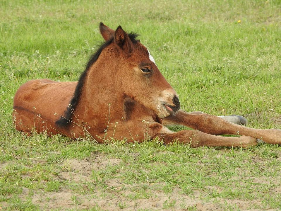 Mammals, Lawn, Animals, Farm, Field, The Horse