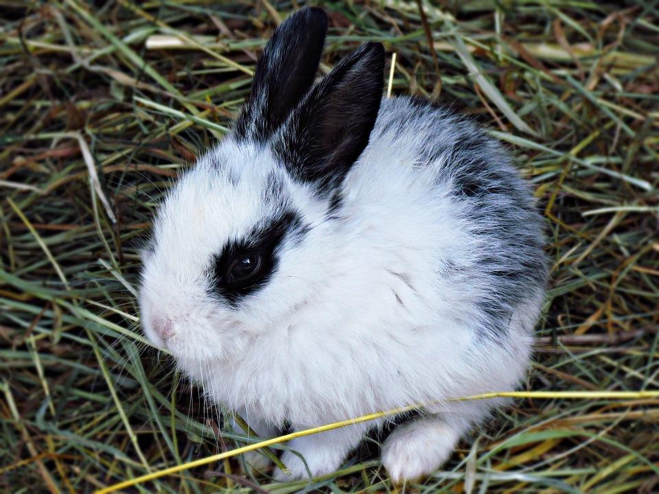 Charming, Rabbit, Animals, Fluffy, Rodent, Nature