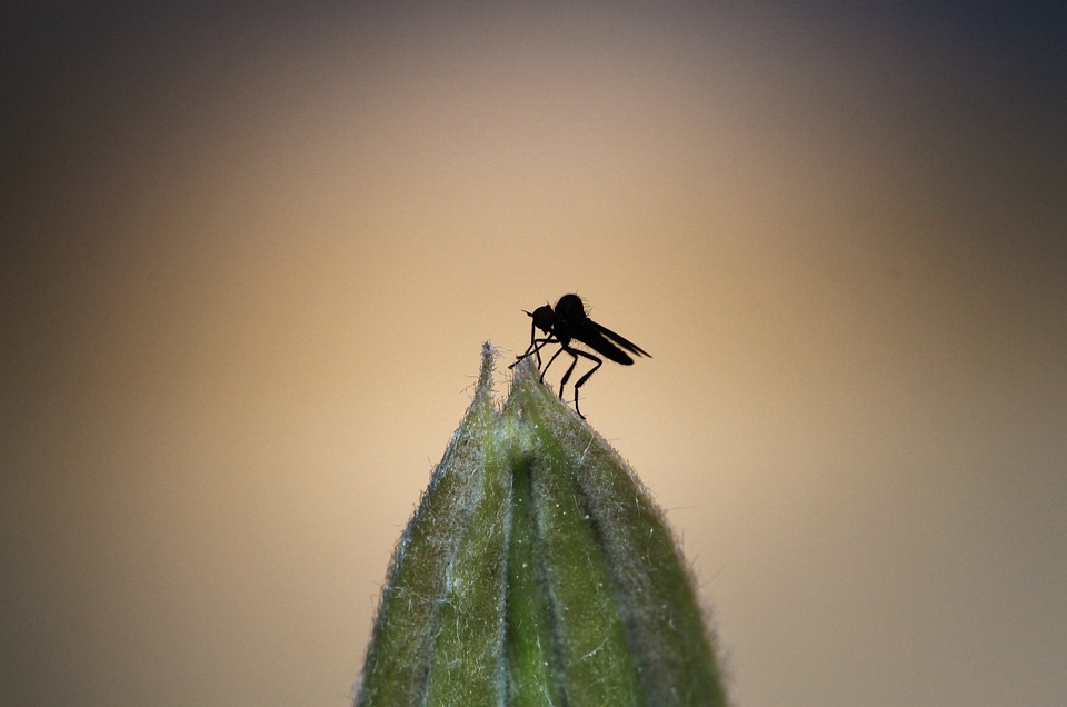 Fly, Insect, Animal, Animals, Flight Insect
