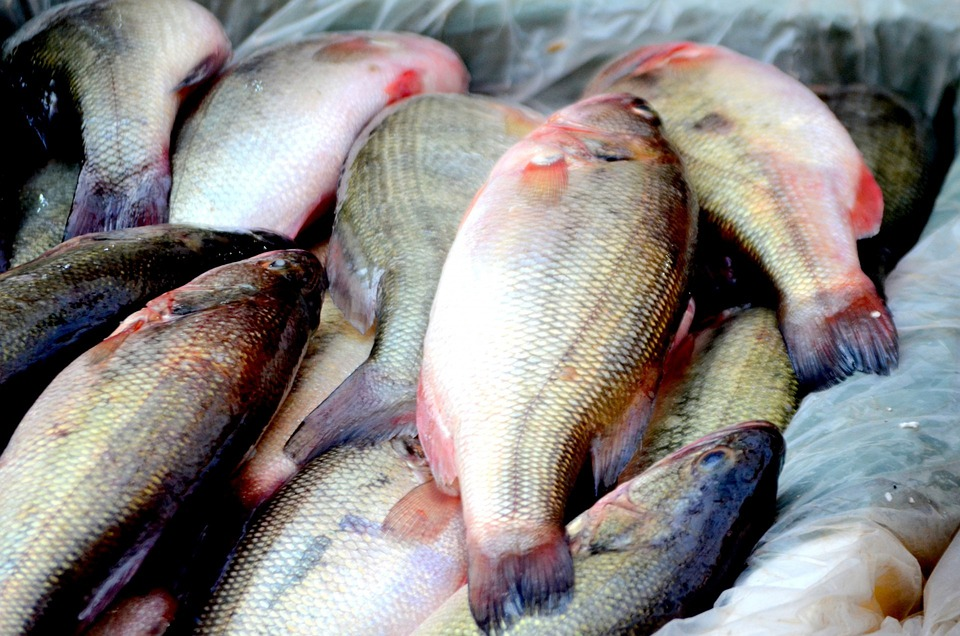Fish, Animals, Seafood, Food, Business, Market