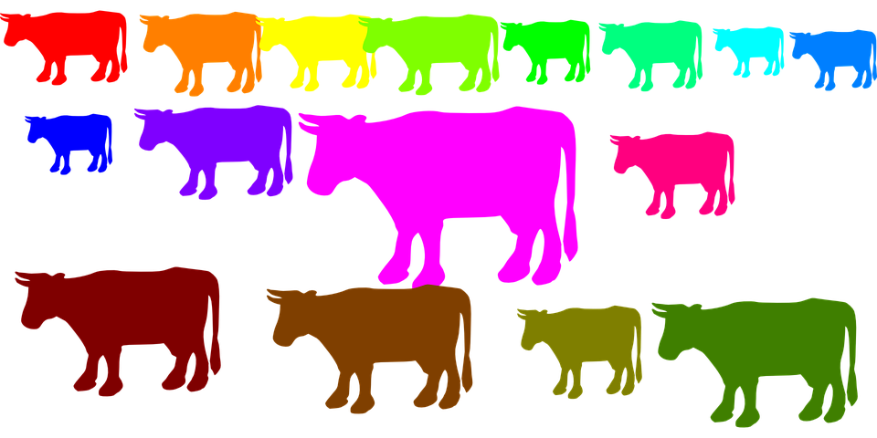 Cows, Herd, Animals, Rainbow Colors, Farm, Farm Animals